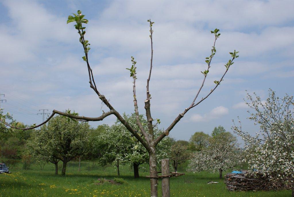 Geliebte Veredelung von Obstbäumen – OGV Mössingen e. V. &PG_19